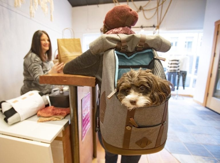K9 Rucksack: You and Your Dog Can Go Together (And Cats Too)