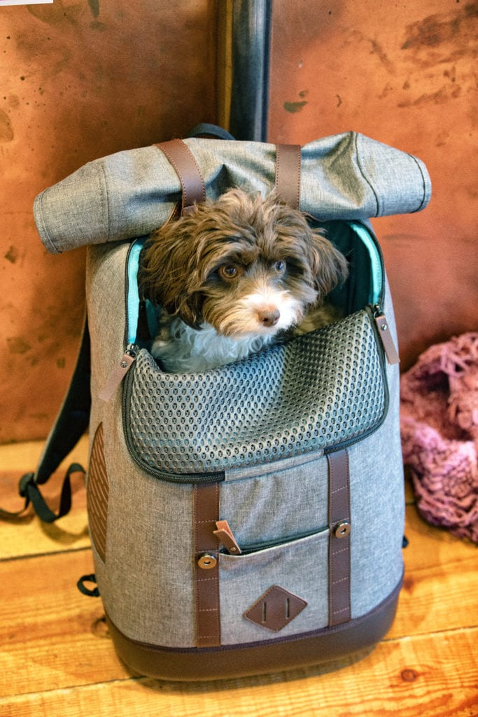 K9 rucksack pet carrier